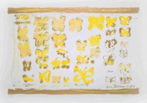Jakub Špaňhel prodej grafik Sbírka motýlů web 53-80cm 70-100cm